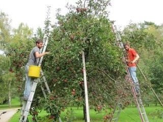과일 수확