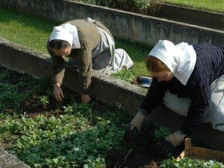 모종을 심는 자매들